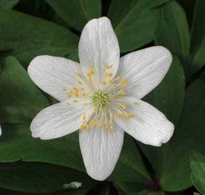 A - Z Perennial Plants